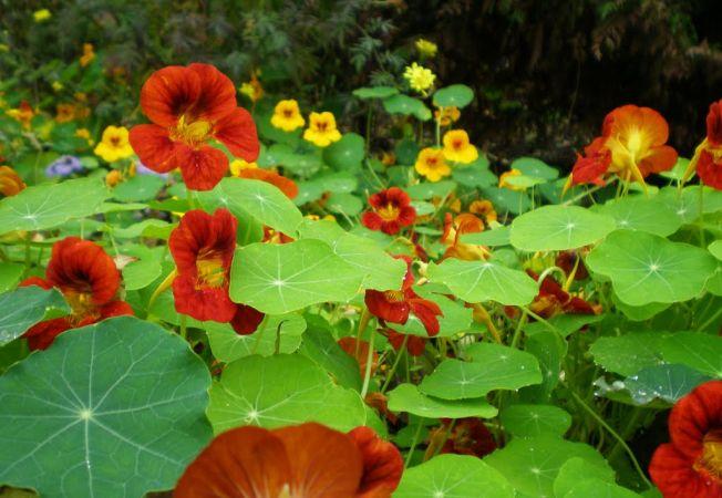 5 plante care supravietuiesc in conditii vitrege