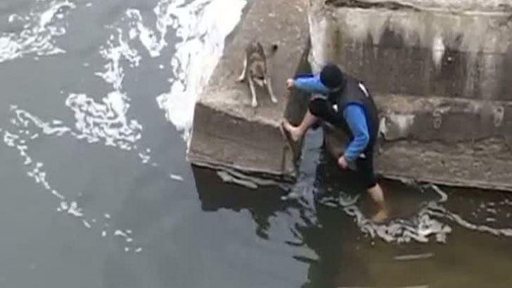 Cainele care uimeste Occidentul: Reactie aproape umana a unui maidanez salvat din Somesul Mic