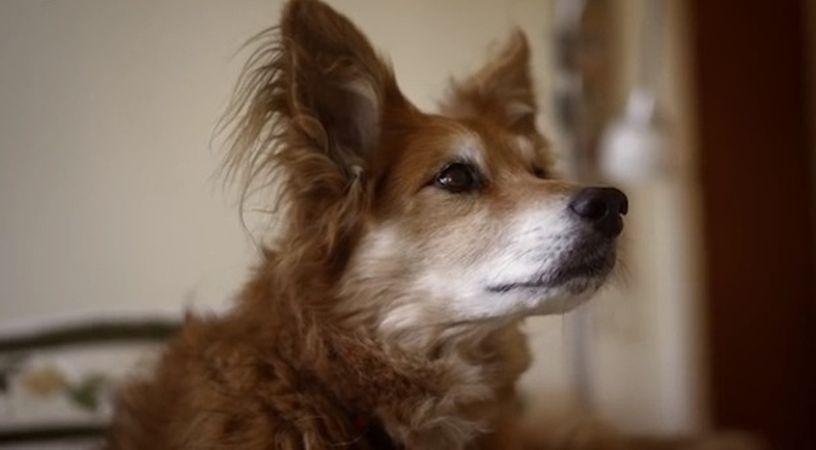 Max, cainele care si-a salvat stapana bolnava de cancer