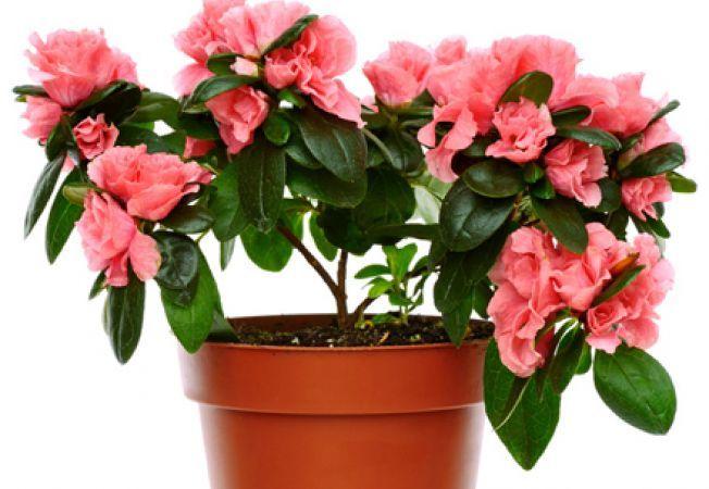 Ele sunt plantele superbe care iti purifica aerul din casa!