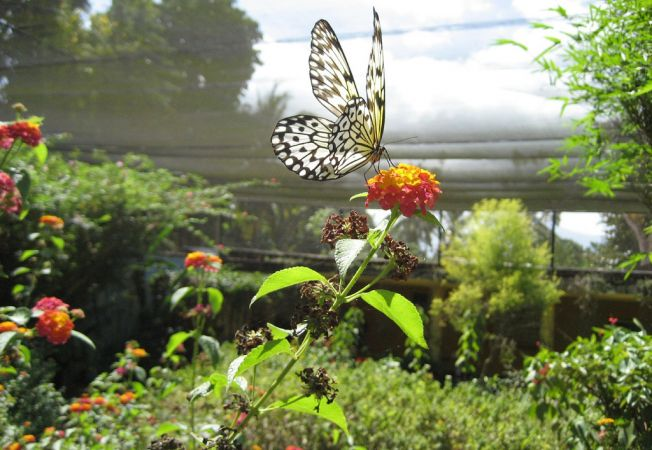 Visezi la roiuri de fluturi in gradina? Iata cu ce plante ii poti atrage!
