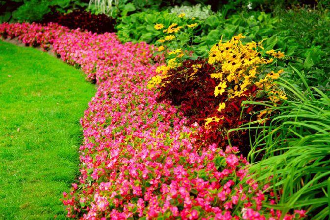 Vrei o gradina multicolora? Iata care sunt florile pe care trebuie sa le cultivi
