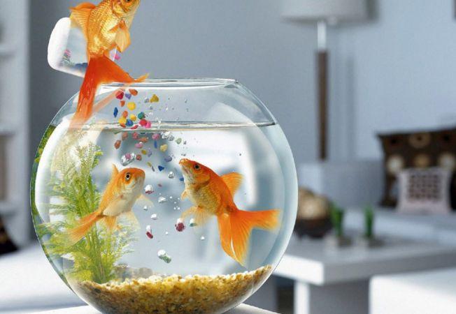 5 animale care atrag norocul si fericirea in viata ta