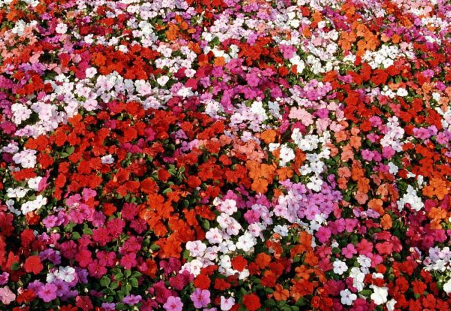 Calendarul florilor pentru luna mai: Iata cele mai spectaculoase alegeri pentru gradina ta!