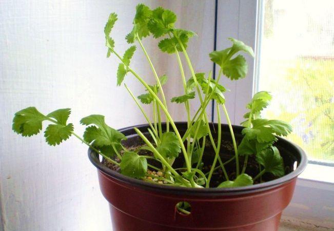 12 legume care se regenereaza in mod miraculos!