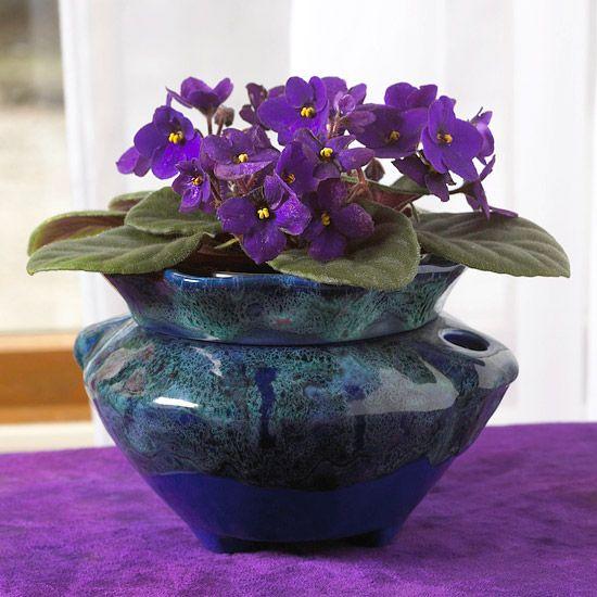 Cauti plante de apartament cu flori superbe? Iata 5 soiuri minunate!
