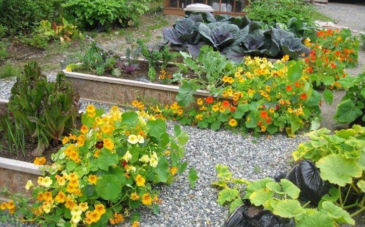 Ce plante sa cultivi impreuna in gradina ta pentru a le feri de daunatori