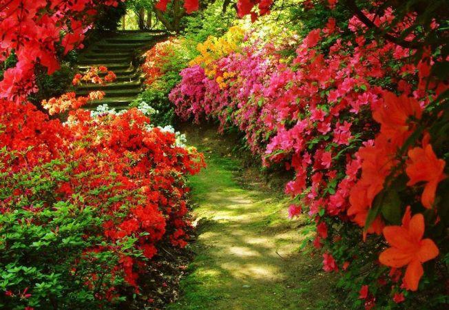 Visezi la borduri verzi incantatoare in gradina? 4 sfaturi utile de la peisagisti!