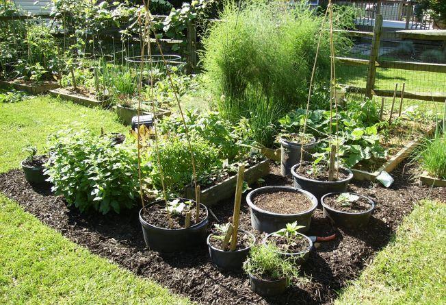 Fa-ti gradina de legume in ghivece! 6 plante usor de crescut si de intretinut