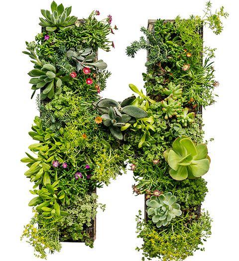 Cum sa faci un panou artistic din plante suculente pentru gradina ta