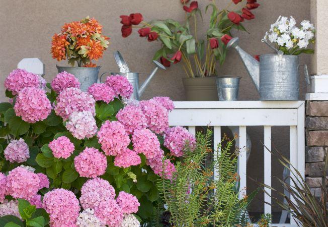 Flori multicolore de gradina care prefera umbra