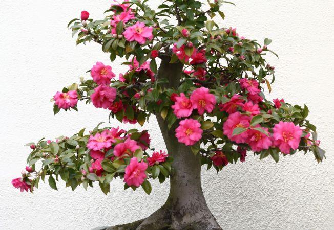 3 arbusti exotici de efect pentru decorarea casei tale. Pe care il alegi?