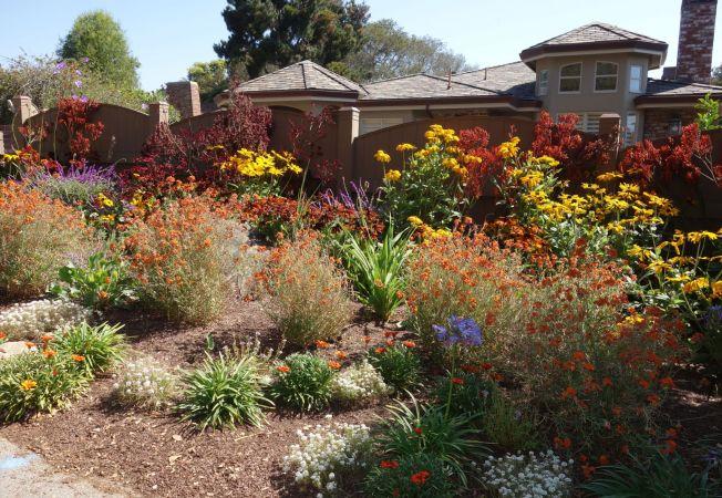 4 plante pentru o gradina in culori perfecte. Uite ce flori rezista pana la sfarsitul toamnei!