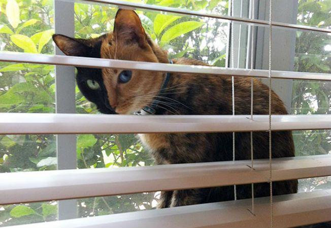 pisica venus 2