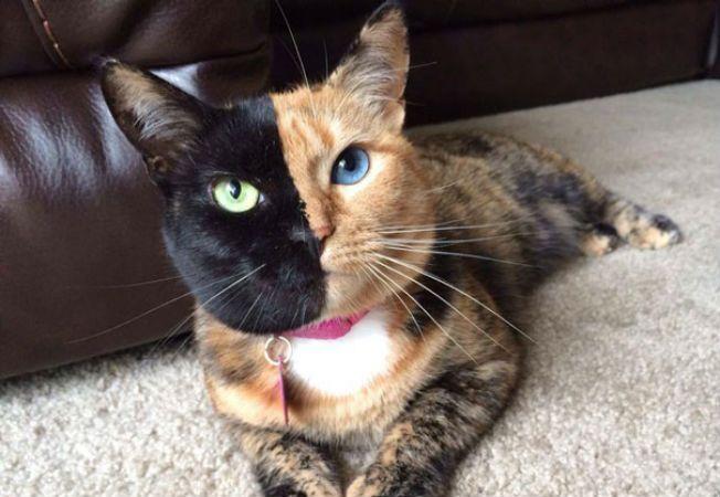 pisica venus 3
