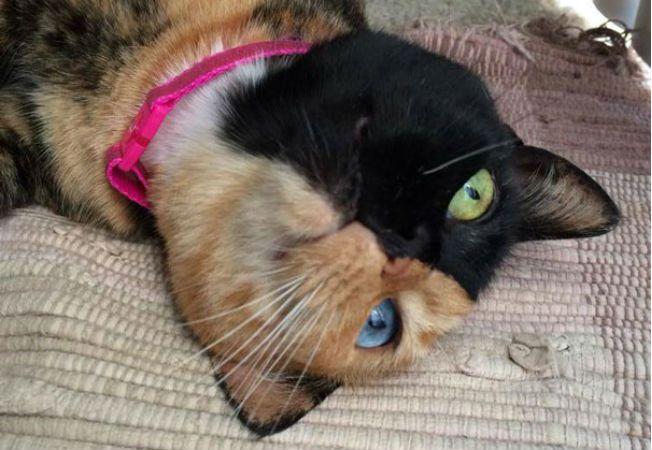 pisica venus 4