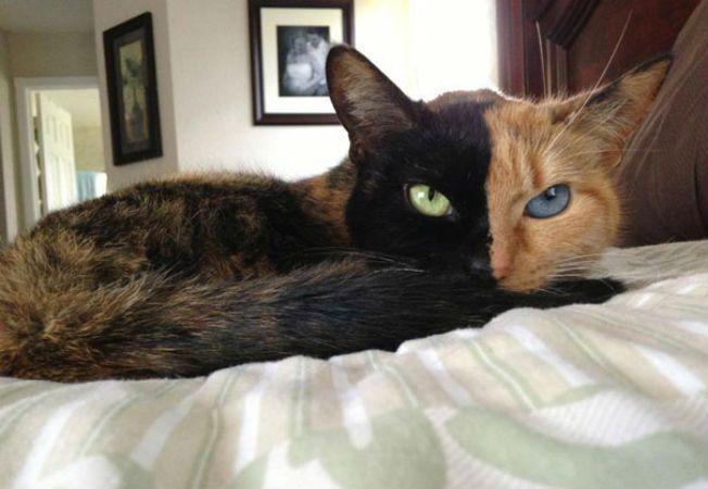 pisica venus 5