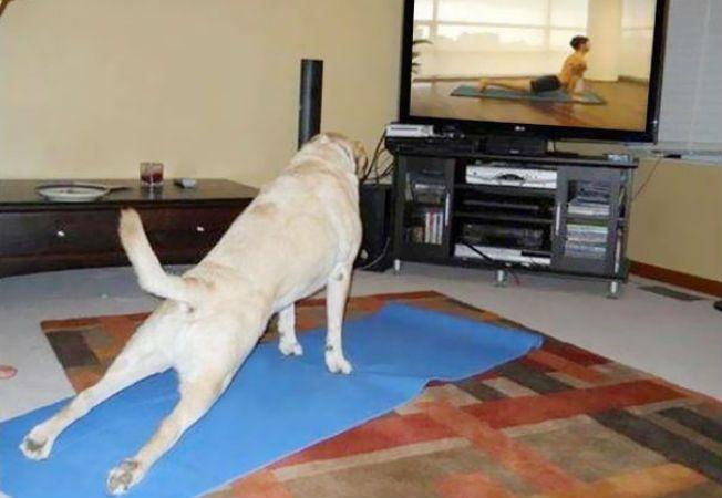 animale yoga 2