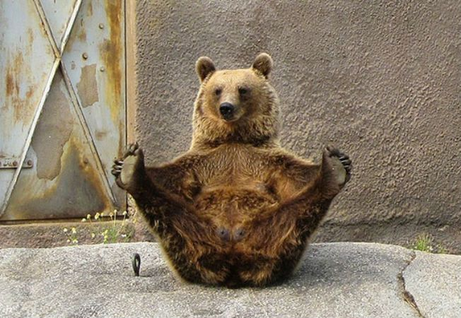 animale yoga 6