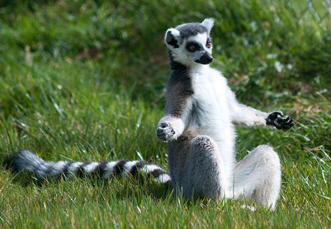 animale yoga 7