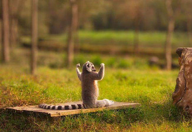animale yoga 9