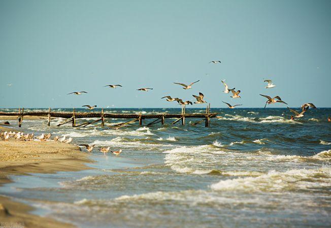 5 plaje salbatice de vis din Romania si cum poti ajunge la ele