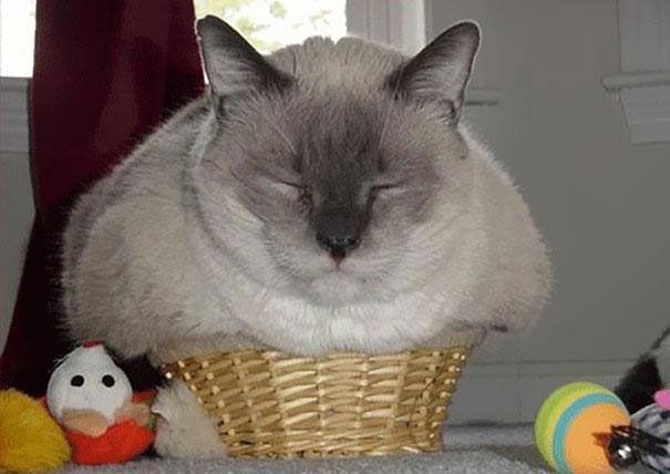 pisica 7