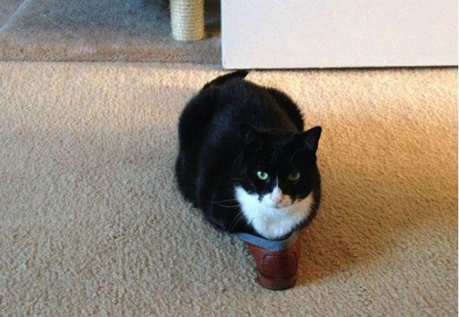 pisica 8