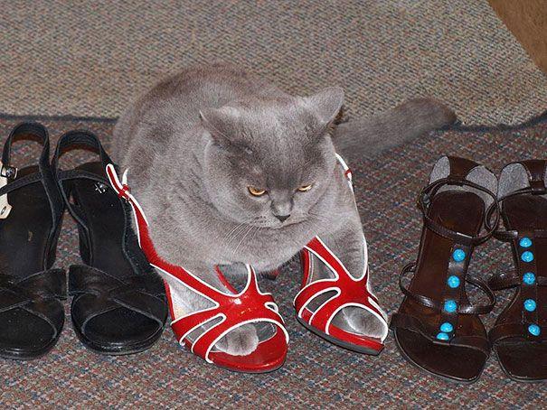pisica 9