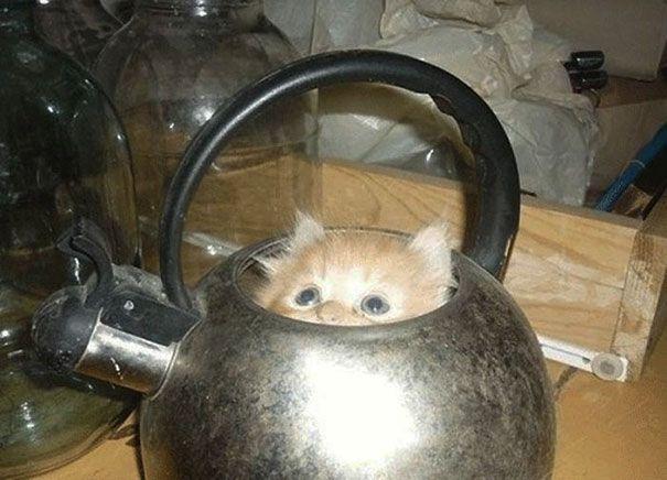 pisica 11