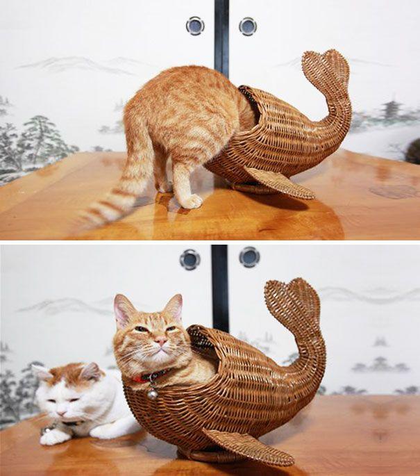 pisica 13