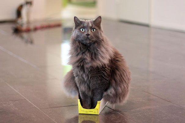 pisica 15