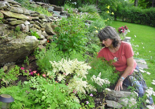 5 plante medicinale pentru o gradina ca o farmacie