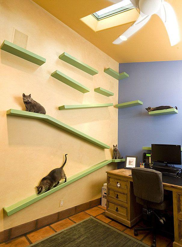 casa pisici 8