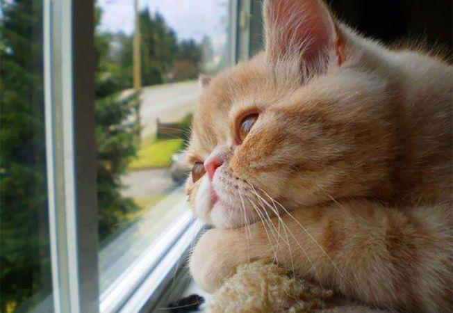 pisici melancolice