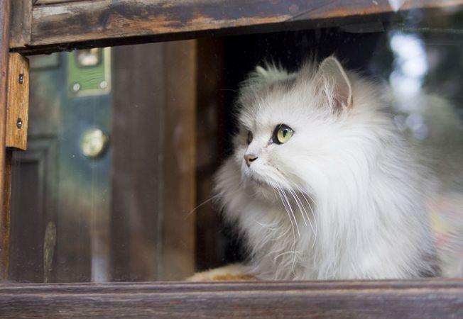 pisici melancolice 2