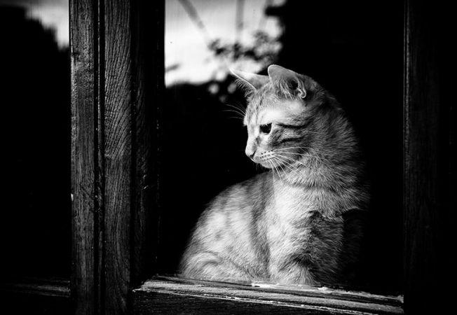 pisici melancolice 3