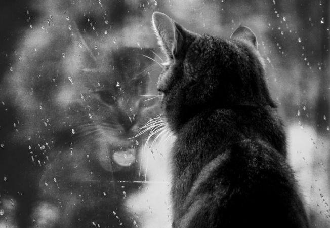 pisici melancolice 8