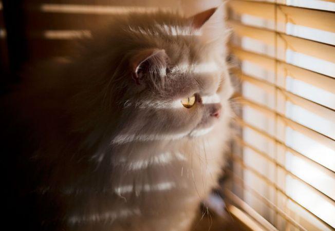 pisici melancolice 9