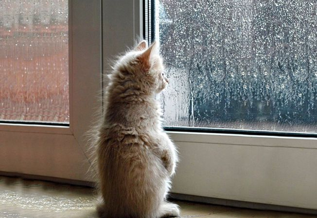 pisici melancolice 10