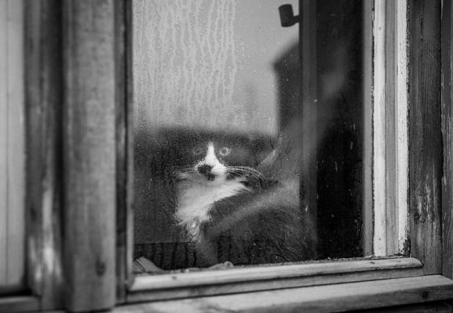 pisici melancolice 11