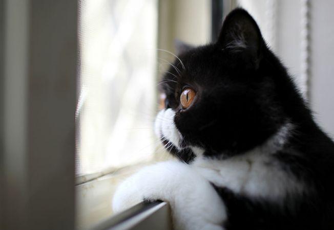 pisici melancolice 12