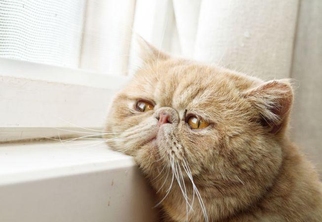 pisici melancolice 13