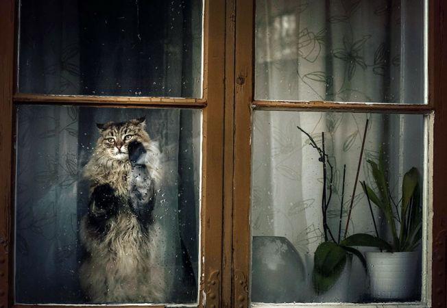 pisici melancolice 14
