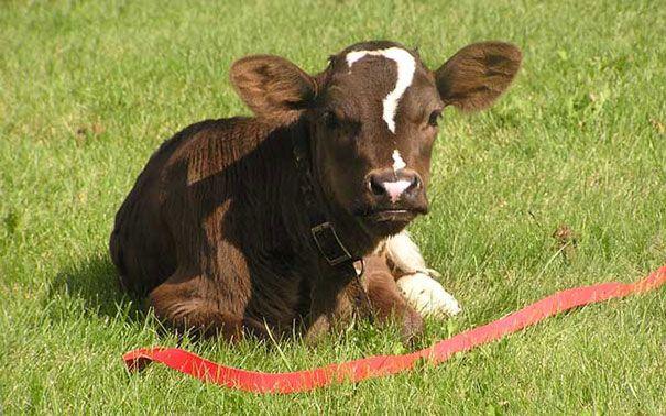 blana animale  19