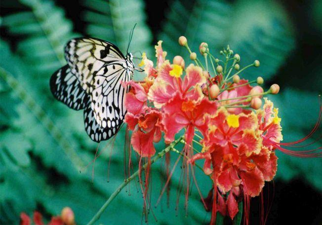 O gradina cu flori tropicale