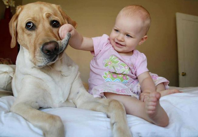 caine bebelus