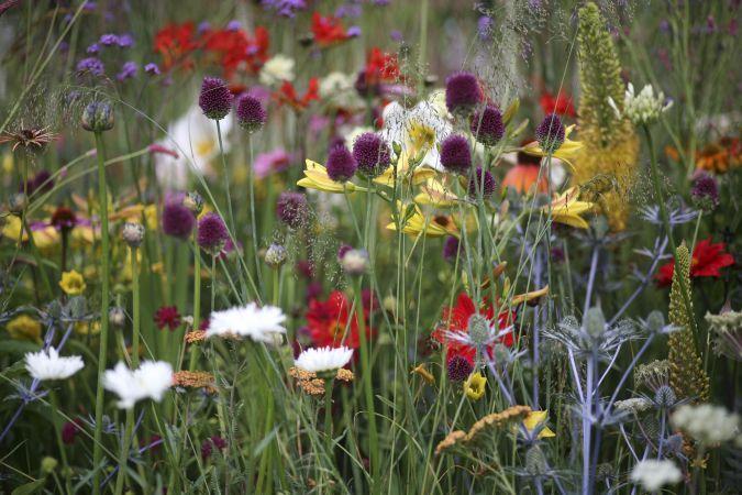5 plante care tolereaza bine seceta