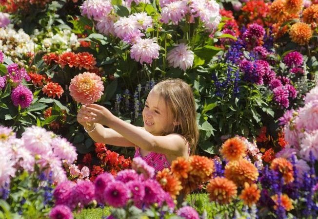 10 flori superbe pentru decor magnific in gradina ta de toamna