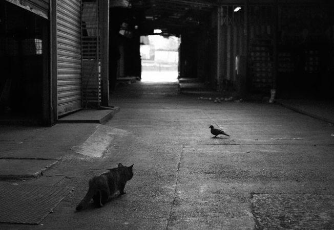pisici misterioase